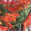 今日の1枚 ~京都・吉田神社の紅葉~