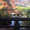 成田の鮮やかな紅葉