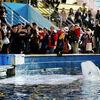 「中国上海の水族館に監禁されたシロイルカ2頭が、アイスランドのサンクチュアリへ」情報まとめ #イルカビジネスに終止符を