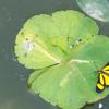 プールに訪れた蝶々