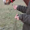 育成馬ブログ 生産編⑧ 「その4」