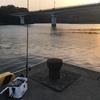 約2ヶ月ぶりに日向市美々津の耳川でカマス釣り^^久しぶりすぎて状況がまったく把握できていないです!