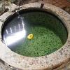 ♨緑の温泉(Index)