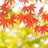 今年こそ庭で綺麗な紅葉が見たい!モミジを美しく紅葉させるための4つのポイント