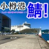 8月27日 小樽フェリー乗り場 あぁ愛しきサバよ