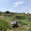 雑草の季節~絶対防衛圏ちょっぴりだけ拡大中