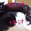 猫の健康をチェックしよう~!「自宅編」