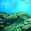 アクションカメラ AKASO EK7000を持って水族館と海へ行ってきました。
