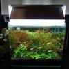 水草照明 光漏れ対策