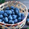 ミキサーを使わずに【スムージー】作り♪<ブルーベリー&バナナヨーグルト・スムージー>