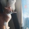 【猫ブログ】みんなの日課