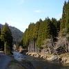 人工の杉と天然の杉