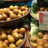 黄肉種キウイ:昨日購入したものは「オニマタタビ!?」 知っていた方にとっては何を今更ですが----:キウイは  ツツジ目 Ericales  マタタビ科 Actinidiaceae  マタタビ属 Actinidia.オニマタタビの変種が黄肉キウイ.サルナシ,シマサルナシと呼ばれていたマタタビ属の樹木の実も「キウイ」として販売されているんだそうです.