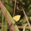 10/9/2017・暑い秋の1日、兵庫の播磨は秋の蝶で賑わってました