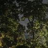 雨上がりに夜の森へ