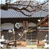 伊豆88 第32番 稲取山 善應院