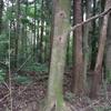 ブナの木クヌギ、コナラ、ブナなどに集まる昆虫たち