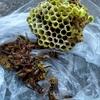 豊橋市で軒下にできたアシナガバチの巣を駆除してきました!