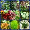 6月『つる植物の園 管理カレンダー』