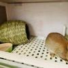 ウサギの寝床は『わらっこ倶楽部かまくらハウス』
