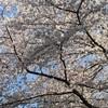 上京してキラキラ輝きたい、それがザ・ノンフィクション