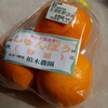 紀州の柑橘類_春峰