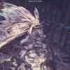MHW:IBβ日記 操虫棍でイヴェルカーナをソロ攻略&IB操虫棍の感想
