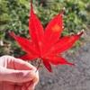 【群馬】秋ももう終わり!ラストチャンス紅葉!【伊香保】