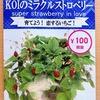 ワイルドストロベリー(KOIのミラクルストロベリー)を半水耕栽培。来年の収穫のために、今年は株の充実に力を入れます