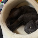 保護猫コタローの家猫修行