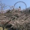 「関東最大級のイルミネーション」と「さくら祭り」inさがみ湖プレジャーフォレスト