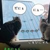しるびぃあ&まめ~北海道の今年の夏は?