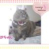 猫ちゃんのお写真紹介.第13弾