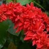 色いろあります南国の花(京都府立植物園・観覧温室)