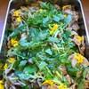 豚肉とヤーコン生姜焼き  菊と三つ葉ちらし