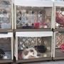 猫シェルターで保護猫を探してきた率直な感想・辛口レビュー!(東京キャットガーディアン 大塚)