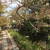 紅葉前の京都 哲学の道