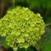 初夏を彩る花 4