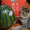 今年も鳥取から激うまの大栄西瓜が届いた