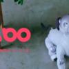 SONYが本気出したww新型「aibo」驚愕の4つの機能