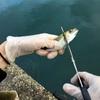 サビキで小アジを釣りに行く時の、便利な3種の神器。