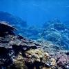 【タモの柄で簡単!水中撮影】超長い自撮り棒アイテム「GOPRO・OSMO」