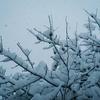 「雪かき」「雪寄せ」「雪投げ」...皆さんは何と呼びますか??