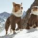 【ペットウェア】暖かさ重視!!冬向けのペットウェアを紹介!!