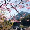 梅や桜の話はよく聞くが、なぜか聞こえてこない桃の花