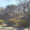 冬散歩。~石神井公園の三宝寺池より~