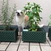 ネット通販で初めて苗を買った。神崎ハーブ園を目指したい。