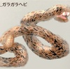 クリップスタジオでヘビ柄ブラシを作ってみたよ