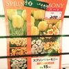 水仙のガーデンジャイアントの芽がでました20190215