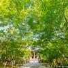 永観堂の新緑風景